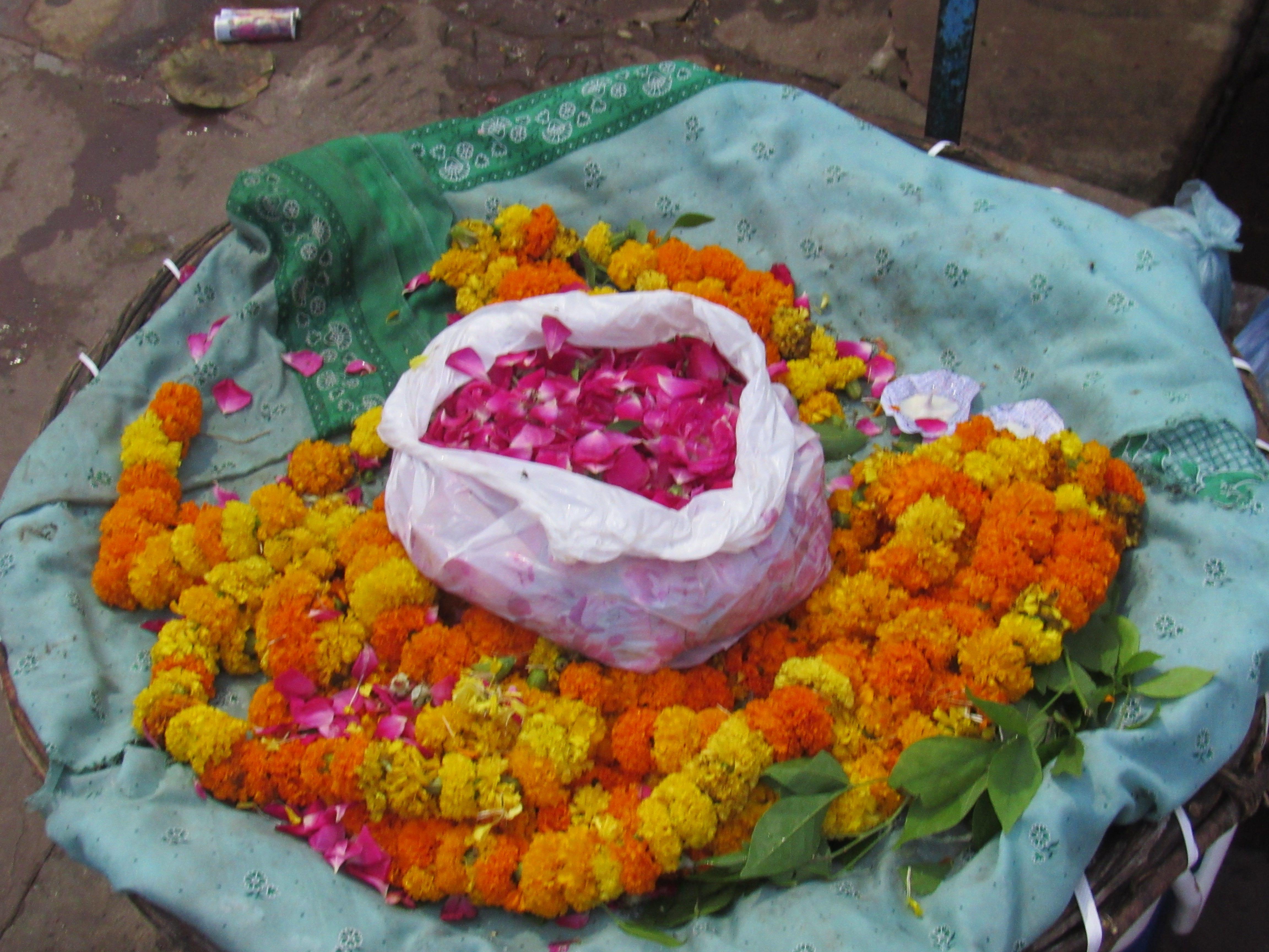 the flower petals